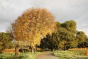 Spring colors at Châteauneuf-du-Pape