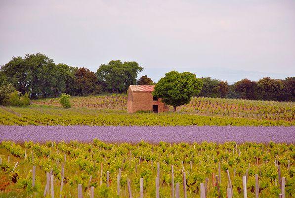 Cabanon des vignes